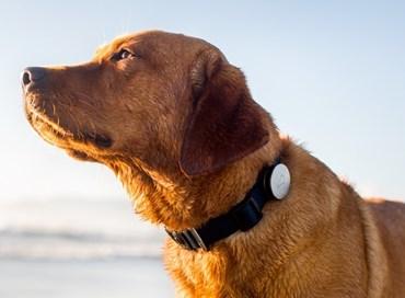Gps antisequestro per cani: vantaggi e rischio hacker