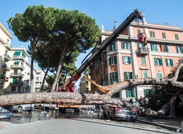 La moda degli alberi che cascano