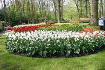L 39 italia un bel giardino fiorito - Come creare un bel giardino ...